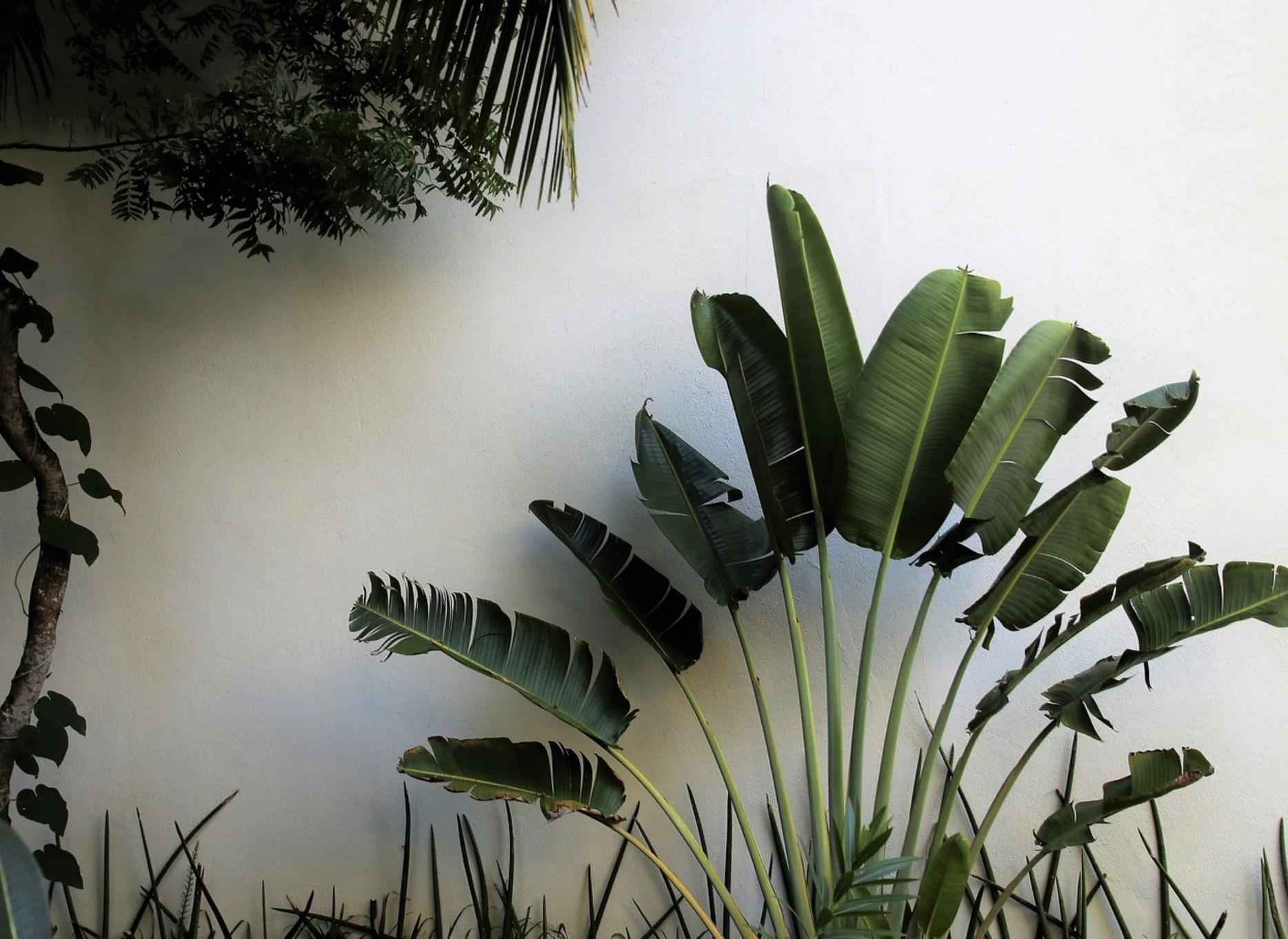 La tendance tropicale pour le salon