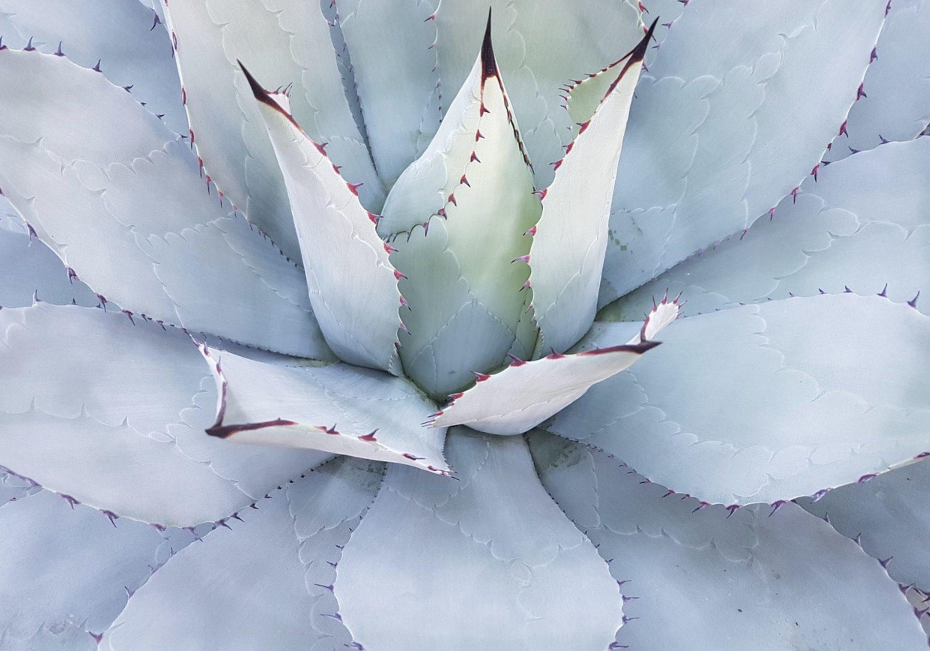 Des plantes grasses