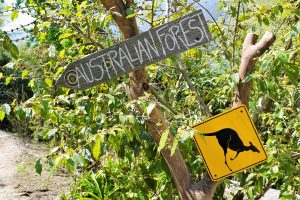 forêt d'Australie