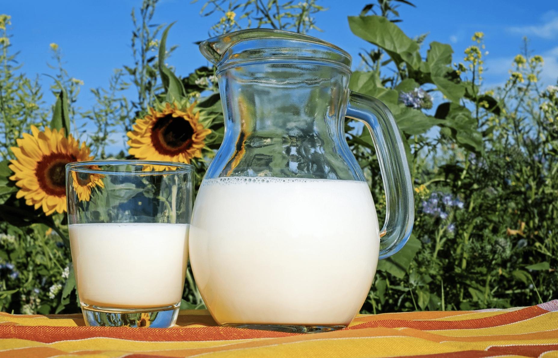 Le lait de vache et le cancer du sein