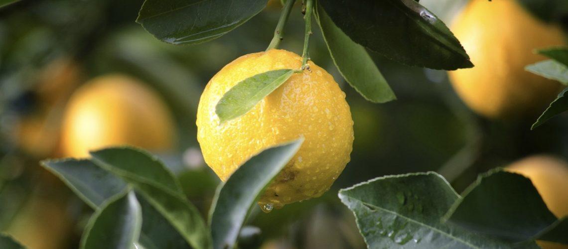 Du citron