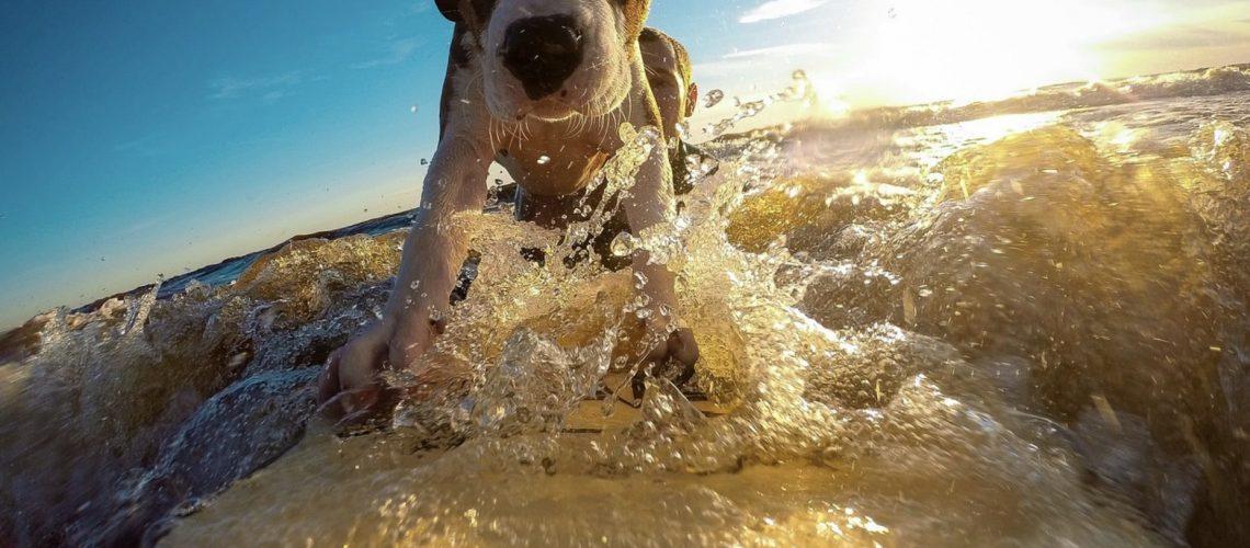 Un chien en vacances